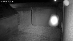 Test Bild einer Infrarot Überwachungskamera mit Spinne